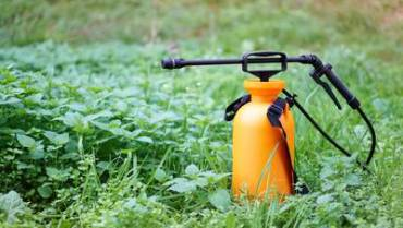 Are Americans Suffering the Effects of Pesticides?